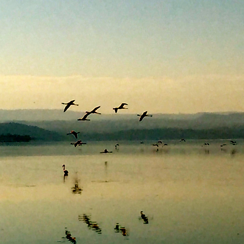 Lake Nakuru, Kenya.